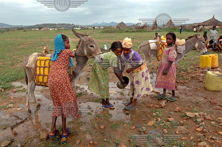 Girls use donkeys with plastic canisters strapped to their backs to carry water which they have collected from a well back to their village. .