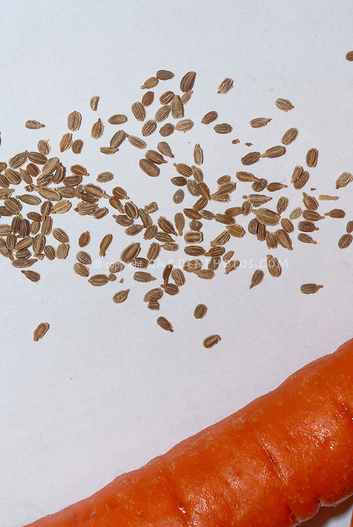 Carrot seeds, vegetable seeds with orange carrots