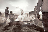 USA, Wyoming, Encampment, cowboys brand cattle at Big Creek Ranch