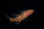 Fish ID plz 9-3-18-9298