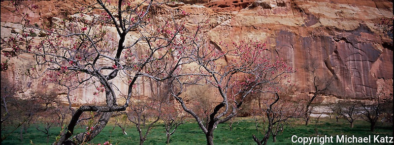 Cherry Orchard, Capitol Reef NP