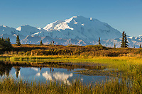 Hiker walks by a tundra pond in the autumn tundra by Mt. Denali, Denali National Park, Interior, Alaska