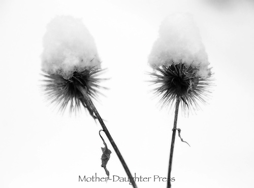 Two dried thistle flower casings with snow like little pointed caps on top of them