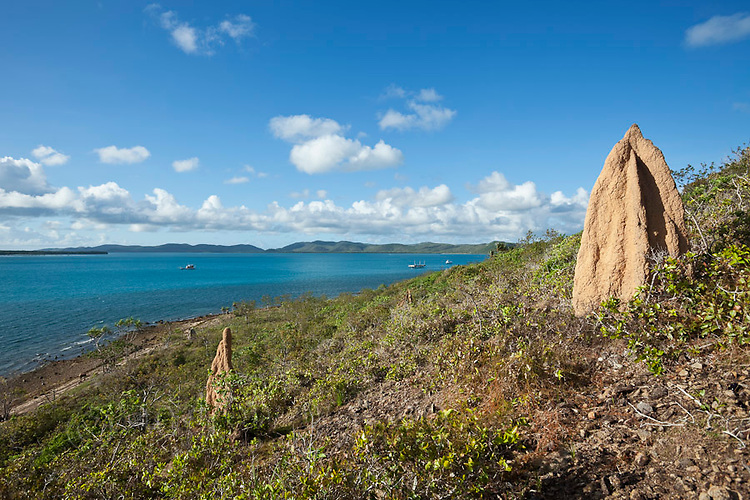 Termite mounds overlooking the coast.  Thursday Island, Torres Strait Islands, Queensland, Australia