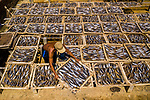 More than 10,000 fish are laid out to dry in neat rows of boxes.  The mackerel are left under the hot sun after being caught and brought to shore by fishing boats and are later sold to markets and supermarkets.<br /> <br /> These aerial photographs of the fish being left to dry in wooden boxes were captured at  Long Hai Commune, Long Dien District, Vietnam.  SEE OUR COPY FOR DETAILS.<br /> <br /> Please byline: Trung Anh/Solent News<br /> <br /> © Trung Anh/Solent News & Photo Agency<br /> UK +44 (0) 2380 458800