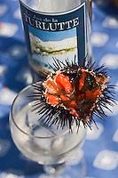 Europe/France/Provence-Alpes-Côte d'Azur/13/Bouches-du-Rhône/Marseille: Repas au cabanon d'Yves Darnaud, cabanonier à la Calanque de Sormiou - Oursins et vin blanc