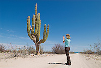 Adult female taking picture of large Cordon cactus, Baja California, Mexico