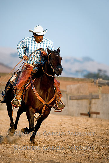 Cowboy roping and riding black horse. San Luis Obispo, California (Ron Garcia)