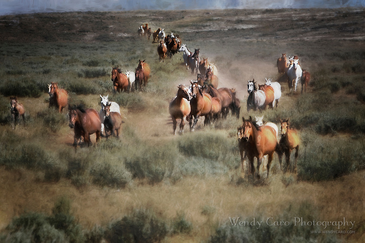 Herd of mares and foals stampeding through a field