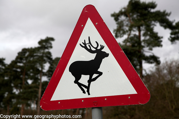 Deer warning red triangle road sign