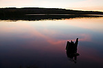 Sihouetted tree stumps as dusk settles on Galerairy Lake in Ontario's Algonquin Provincial Park in Canada.