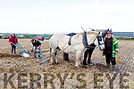 Jerry Dennihan (Farmers Bridge), Moss and Jonathan Trant (Tralee) working the horses at the Ardfert Ploughing on Sunday.