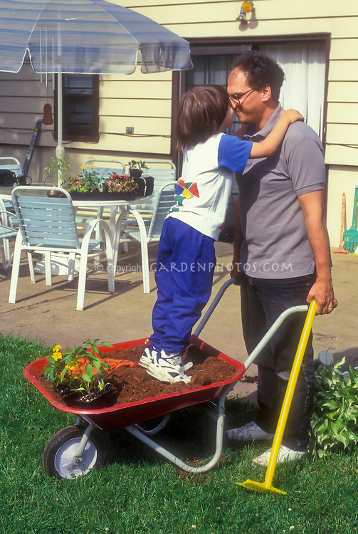 Father and son gardening together, Dad and boy, with young child standing in wheelbarrow of soil and plants, nose to nose with man, in backyard, intergenerational family gardening