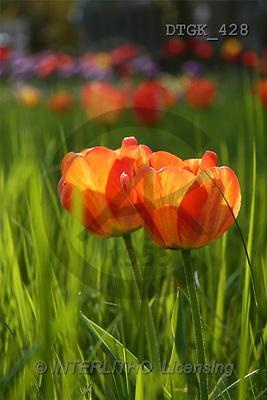 Gisela, FLOWERS, art, photos(DTGK428,#F#) Blumen, flores, retrato