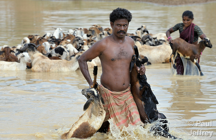 A man carries goats from a pond after bathing the animals, near Anaikulam, a small village in the state of Tamil Nadu in southern India.