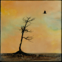 Lonesome crow, encaustic photo transfer SOLD