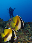 Siaes Tunnel, Palau -- Masked bannerfish and diver.