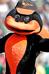 21 May 2007: Baltimore Orioles mascot Oriole Bird looks entertains the fans during Baseball's Annual Hall of Fame Game at Doubleday Field in Cooperstown, NY. The Orioles defeated the Toronto Blue Jays 13-7 in front of a sellout crowd of 9,791 at the historical ballpark...Mandatory Credit: Ed Wolfstein Photo