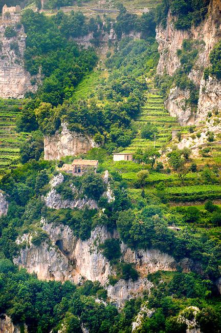 The Amalfi coast mountain vineyards  around Nocelle,  Postiano, Italy