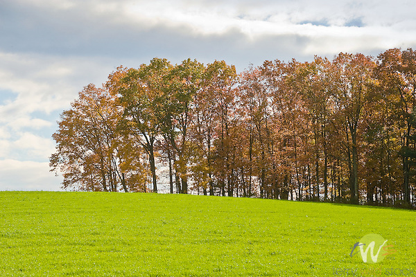 Field with ryegrass and trees in Autumn.