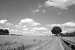 Europa, DEU, Deutschland, Nordrhein Westfalen, NRW, Rheinland, Niederrhein, Schaphuysen, Schaphuysener Hoehen, Agrarlandschaft, Wolkenstimmung, Cumuluswolken, Einzelner Baum, Weg, Strasse, Kategorien und Themen, Natur, Umwelt, Landschaft, Jahreszeiten, Stimmungen, Landschaftsfotografie, Landschaften, Landschaftsphoto, Landschaftsphotographie, Wetter, Wetterelemente, Wetterlage, Wetterkunde, Witterung, Witterungsbedingungen, Wettererscheinungen, Meteorologie, Wettervorhersage<br /> <br /> [Fuer die Nutzung gelten die jeweils gueltigen Allgemeinen Liefer-und Geschaeftsbedingungen. Nutzung nur gegen Verwendungsmeldung und Nachweis. Download der AGB unter http://www.image-box.com oder werden auf Anfrage zugesendet. Freigabe ist vorher erforderlich. Jede Nutzung des Fotos ist honorarpflichtig gemaess derzeit gueltiger MFM Liste - Kontakt, Uwe Schmid-Fotografie, Duisburg, Tel. (+49).2065.677997, <br /> archiv@image-box.com, www.image-box.com]