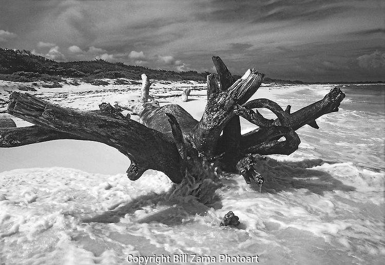 Large driftwood tree in the surf at Cozumel.