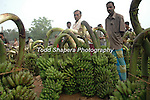 Man sellng bananas in outdoor market, post-Tsunami, Sri Lanka Aftermath of the devastating 2004 Tsunami.
