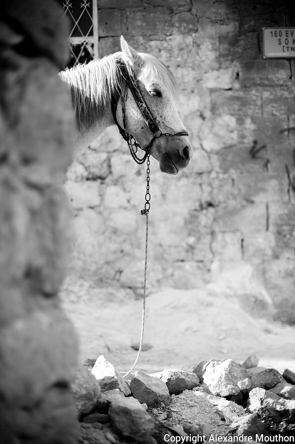 Les ruelles de la vieille ville de Mardin o&ugrave; vivent les familles kurdes et arabes les plus pauvres. La municipalit&eacute; a entrepris de paver les passages afin de diminuer l'insalubrit&eacute; et de pr&eacute;server la richesse urbanistique et architecturale.<br /> <br /> The streets of the old city of Mardin where Kurdish and Arab poorest families live.