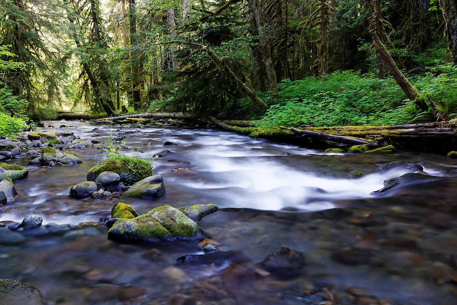 Lillian Creek, Olympic National Park, Washington