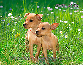 Marek, ANIMALS, REALISTISCHE TIERE, ANIMALES REALISTICOS, dogs, photos+++++,PLMP3125,#a#, EVERYDAY