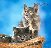 Marek, ANIMALS, REALISTISCHE TIERE, ANIMALES REALISTICOS, cats, photos+++++,PLMP2710,#a#