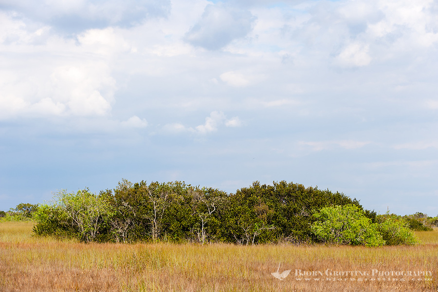 US, Florida, Everglades, Shark Valley. Sawgrass prairie.