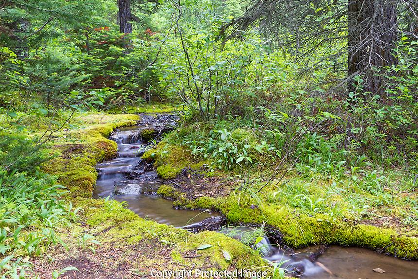 Mountain Stream, Moraine Lake, Alberta Canada