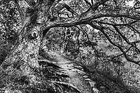 Sycamore Trail