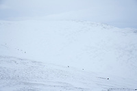 2006 Yukon Quest musher traverses the saddle on Eagle Summit, on the way to Central, Alaska.