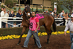 ARCADIA, CA  JANUARY 06: #8 Itsinthepost, in the paddock before the San Gabriel Stakes (Grade ll) on January 6, 2018, at Santa Anita Park in Arcadia, CA.(Photo by Casey Phillips/ Eclipse Sportswire/ Getty Images)