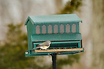 Bird Feeder with tufted titmouse.