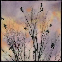 Encaustic photography transfer over encaustic painting of birds in tree.