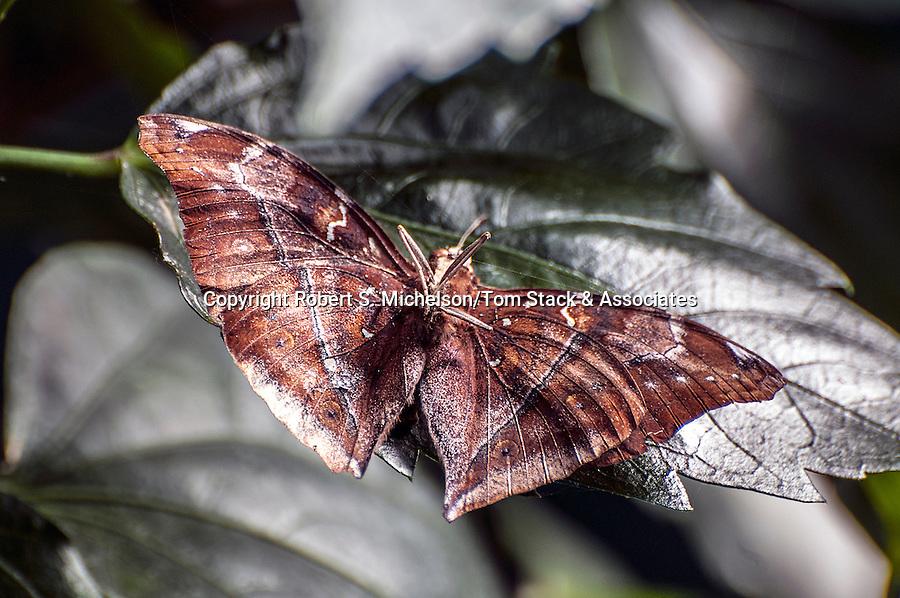 autumn leaf butterfly sitting on green leaf