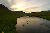 Atlantic Salmon Catch and Release Fly Fishing in Iceland. Fly fisherman in Svarta river at dusk.