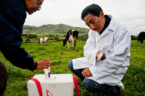 University students test individual dairy cows to certify their health in the Andes of Ecuador.
