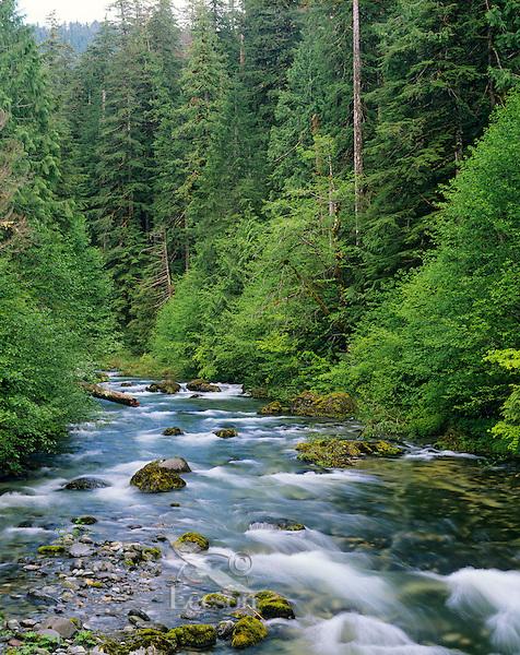North Fork Santiam River, Oregon Cascade Mts. June.