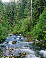 North Fork Santiam River, Oregon Cascade Mts. June.