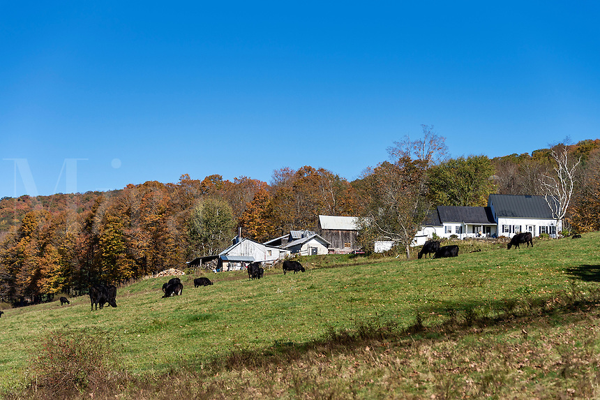 Sugarbush Farm, Woodstock, Vermont, USA