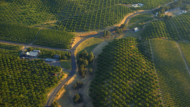 Cherry orchards along Columbia River