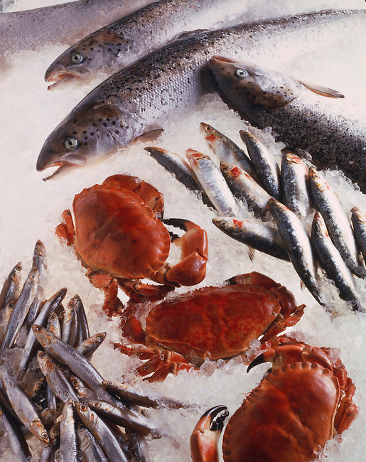 Upright of fresh Sardines, Whole crab & salmon on crushed ice
