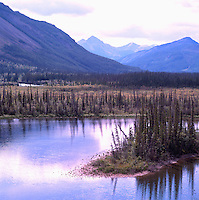 Boreal Black Spruce Forest along Alaska Highway, Northern BC, British Columbia, Canada