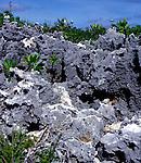 Weathered limestone, Cayman Brac, Cayman Islands, British West Indies,