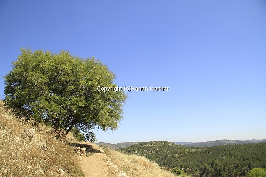 Israel, Jerusalem mountains, a view of Nahal Ktalav