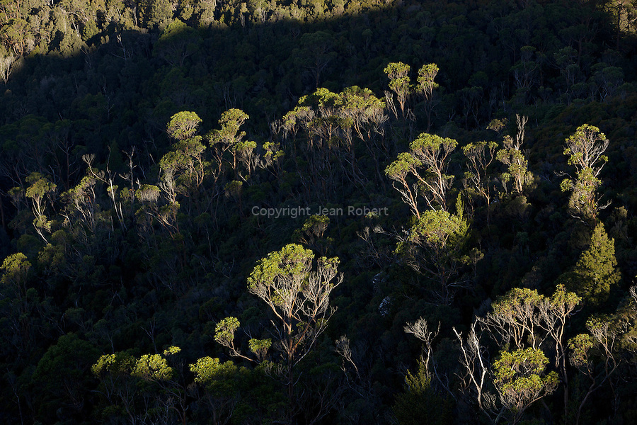 Last lights of the day on the eucalypt forest..foret d'eucalyptus
